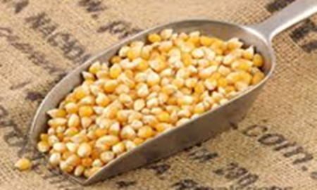 Picture for category Popcorn Kernels